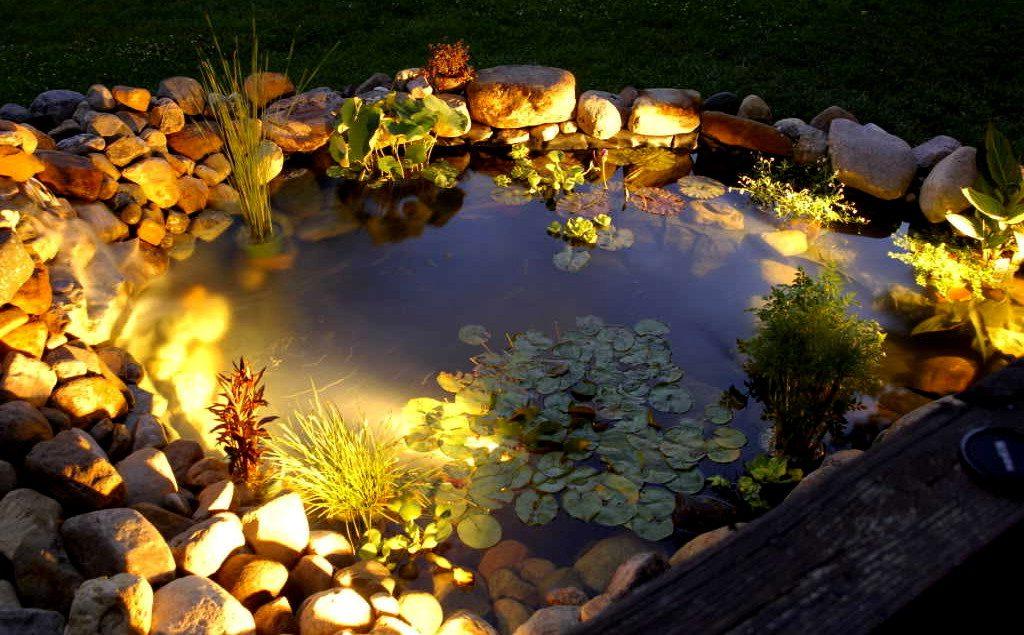 Garden Lighting Tips The Late Show